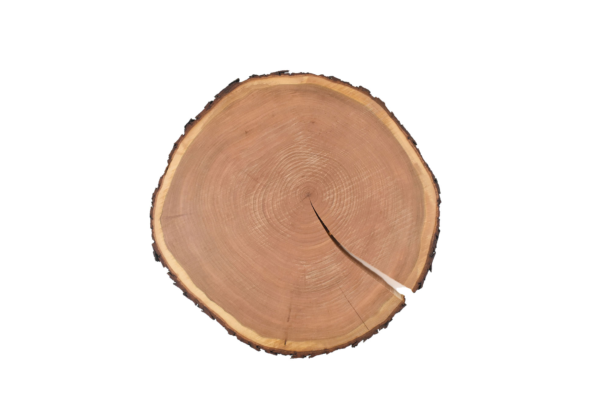 Rustic live edge large round wood cutting/serving board